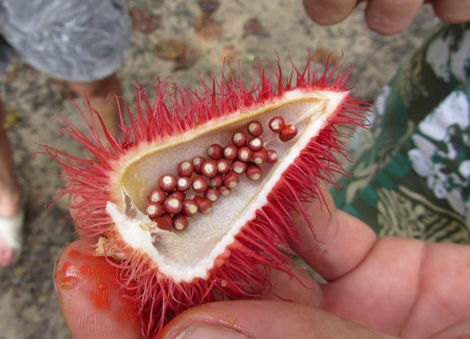 homegrown lipstick fruit