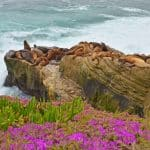 San Diego to Rosarito Mexico: Take a Two Nation Vacation
