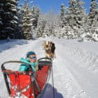 1 Dogsled