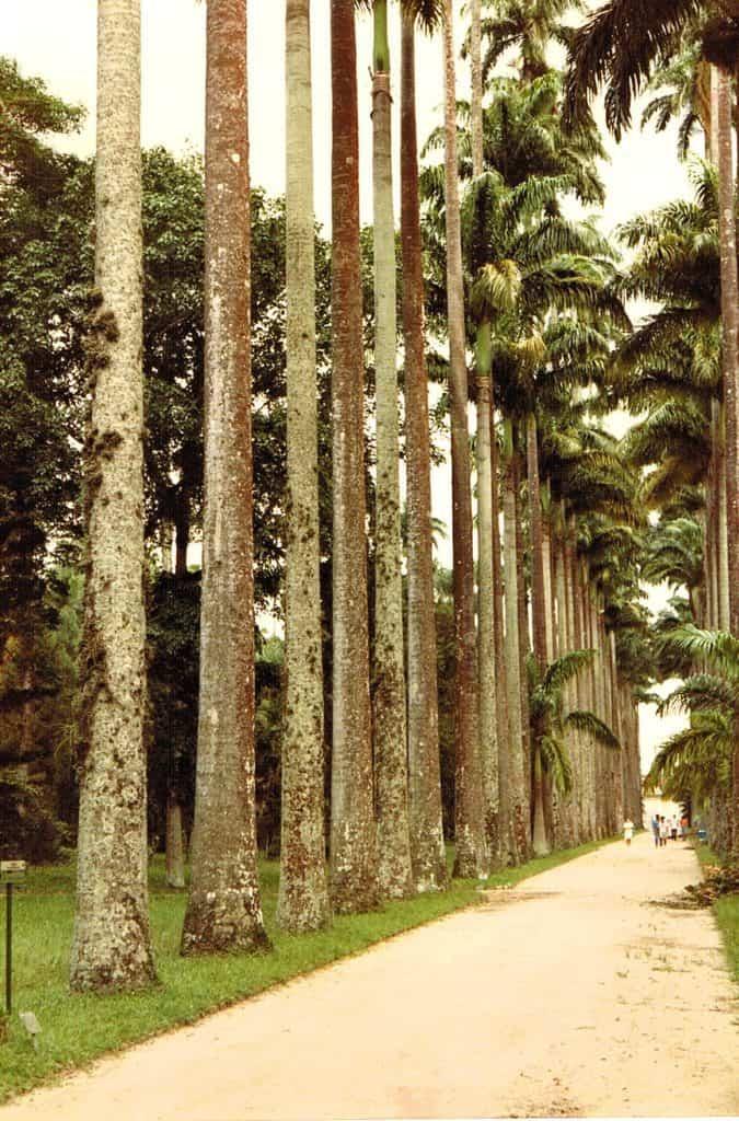 7_Jardim-Botânico_pati-morrow_luggage-and-lipstick