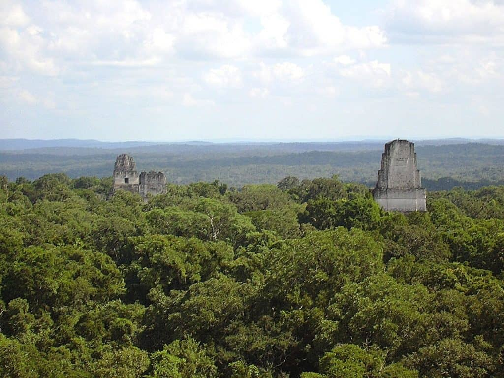 The tops of two pyramids peek out from the rainforest