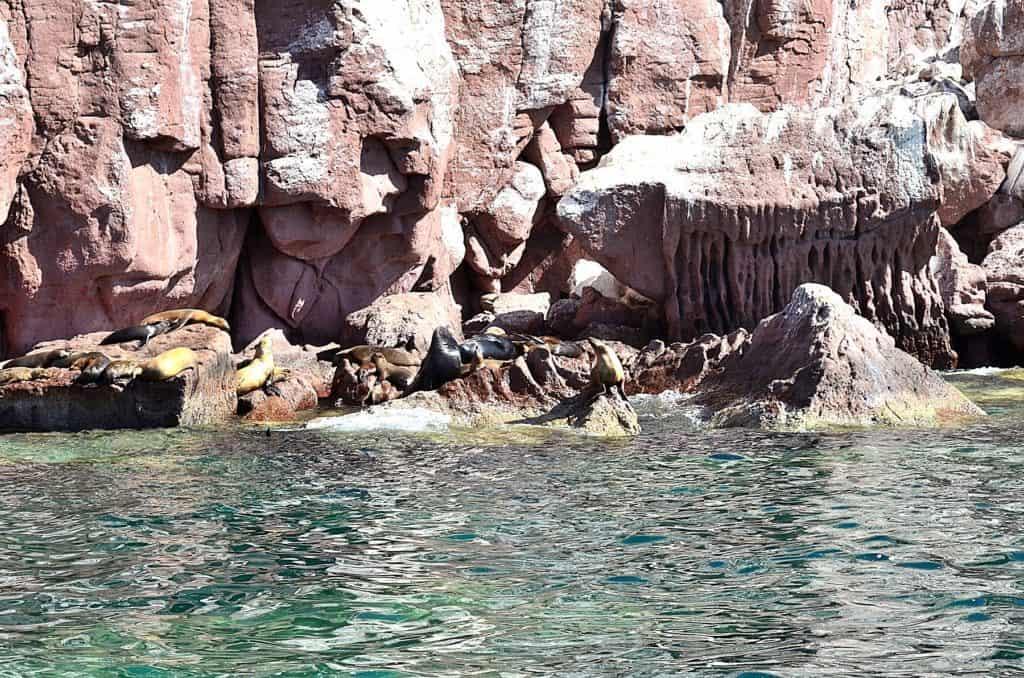Isla Epiritu Santo Island