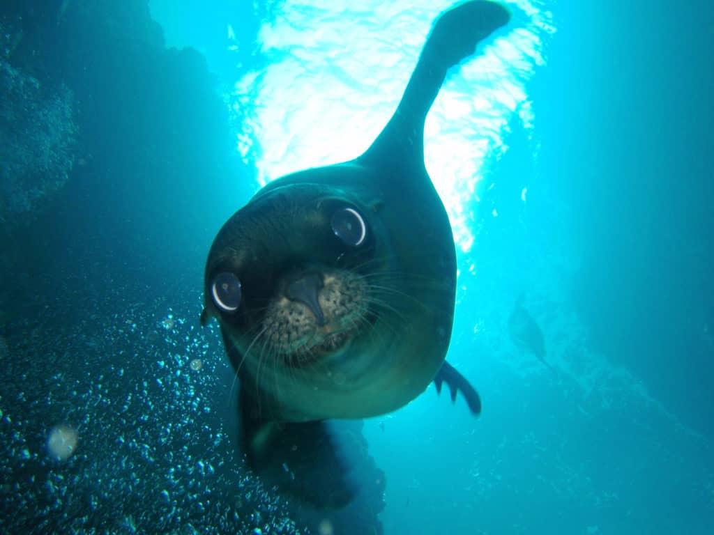 snorkel la paz