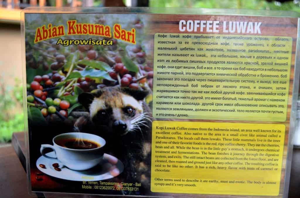 coffee luwak