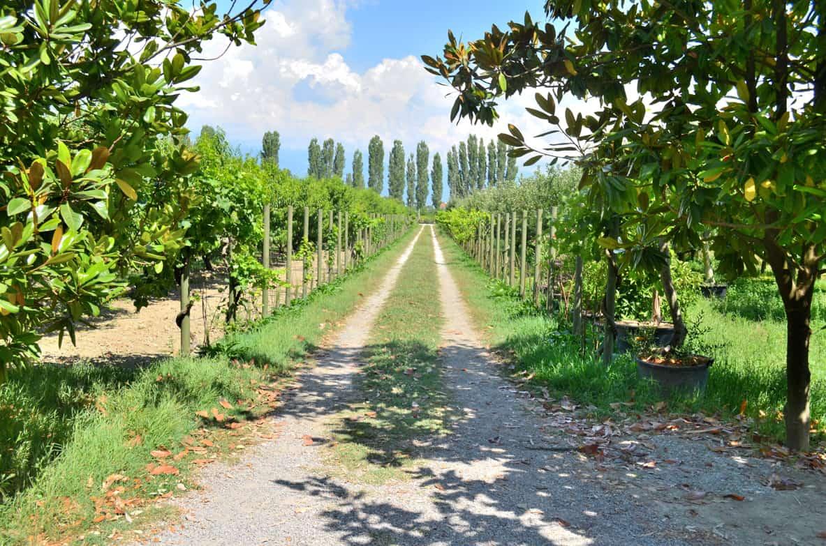 Albanian Wine