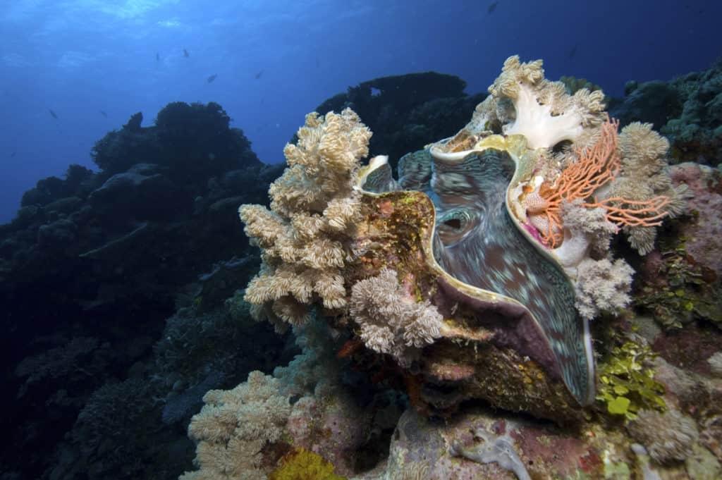 scuba diving cairns