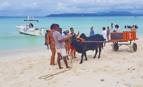 ox cart on the beach