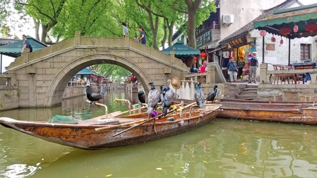 most instagrammable places in tongli