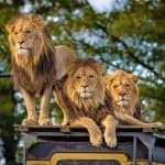 Safari Safety: 10 BEST Tips to Stay Safe