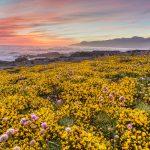 California North Coast: 10 BEST Road Trip Stops